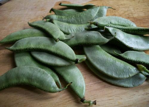 Sheem beans - Hyacinth Beans