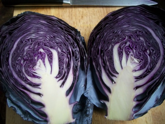 Red Cabbage - The Queen of Vegetalia